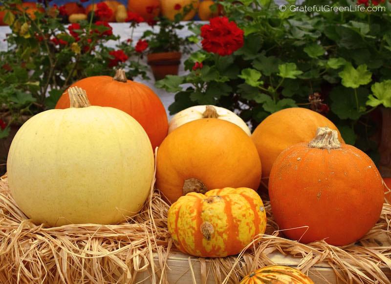 Pumpkins and Winter Squash Harvest