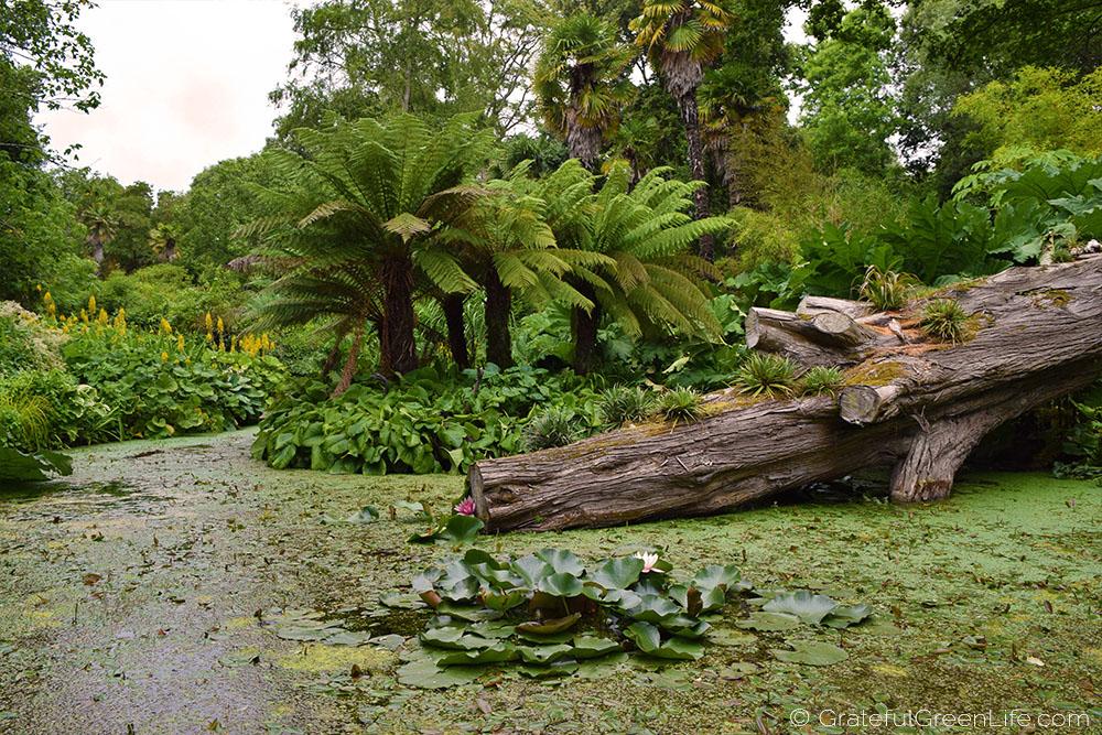 abbotsbury-subtropical-gardens