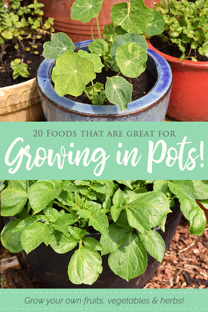20 Foods that are great for growing in pots. Grow your own fruit, herbs and vegetables in containers!